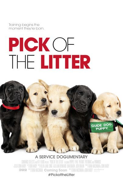 "Movie poster for ""PICK OF THE LITTER"""