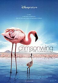 "Movie poster for ""THE CRIMSON WING MYSTERY OF THE FLAMINGOS"""