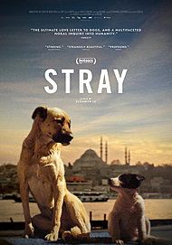 "Movie poster for ""STRAY"""